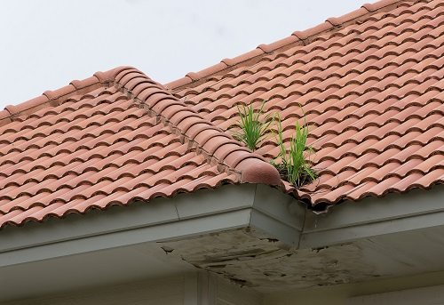 Weeds growing in a roof